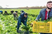 """Nacrt novog zakona o """"sezoncima"""": U korist poslodavca - na štetu radnika"""